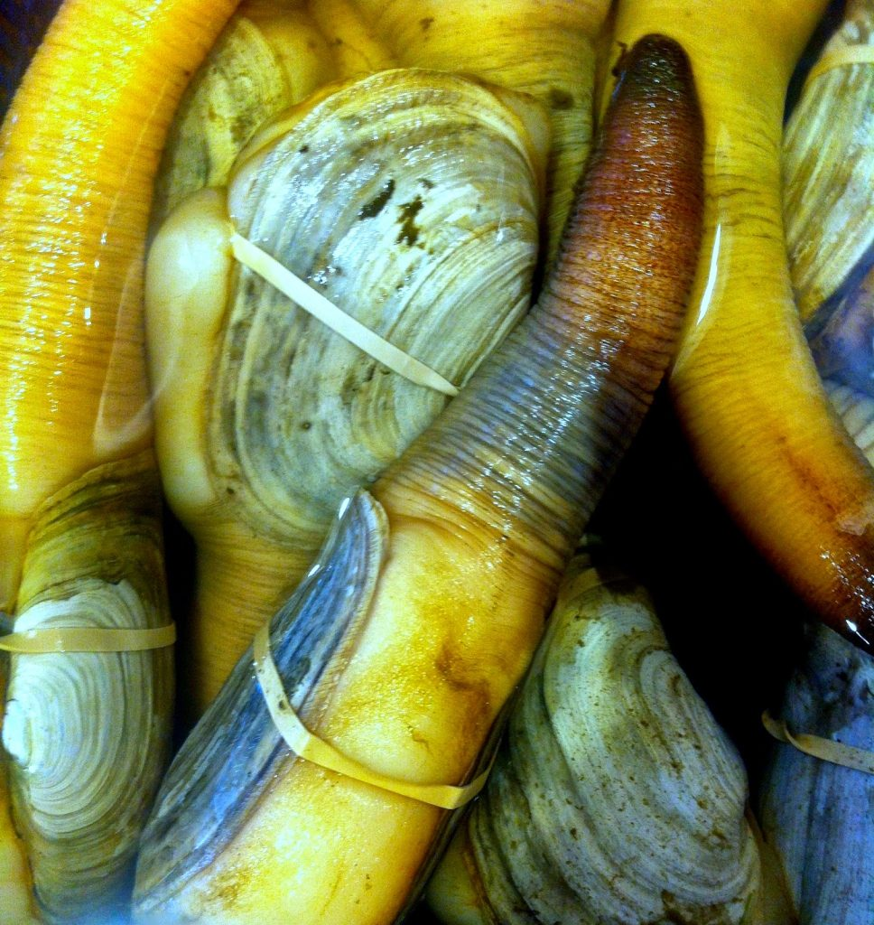 Geoduck, Seattle