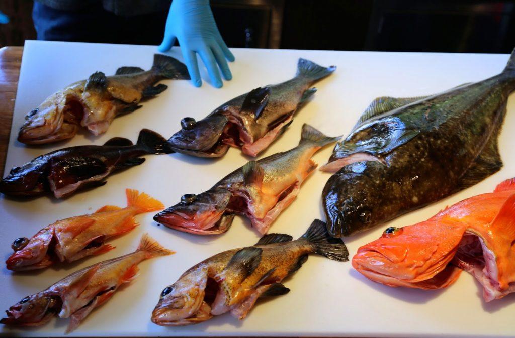 different kinds of rockfish, sitka, alaska