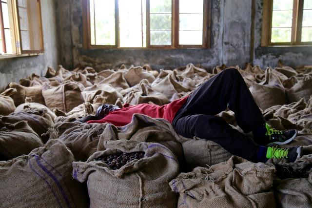 worker resting on sacks of nutmeg at the nutmeg factory, grenada