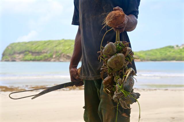 crab catching, Grenada