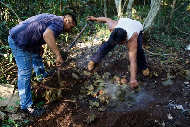 digging up a pibil oven, aldea maya, coba, Yucatan, Mexico