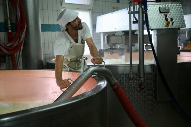 vacuuming out the milk to put into comté moulds, Fruitière, Franche-Comté