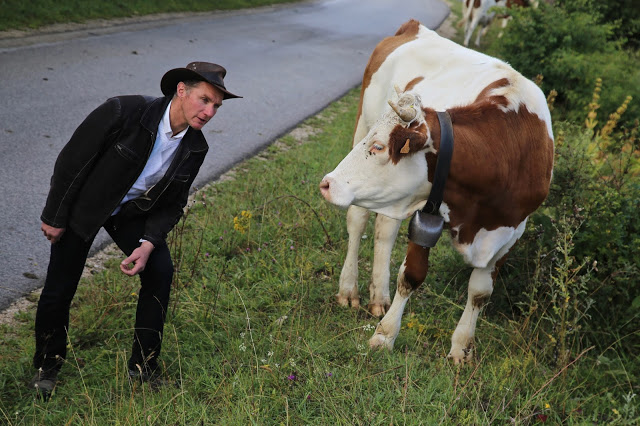 Dairy farmers and cowboy Tas with a Montbeliarde cow, Franche-Comté