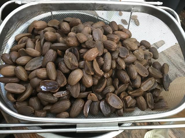 soaked acorns, foraged,  pure food camp, Skane, Sweden