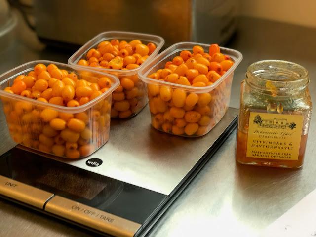 making seabuckthornberry jam, Branneriets farm,  pure food camp, Skane, Sweden