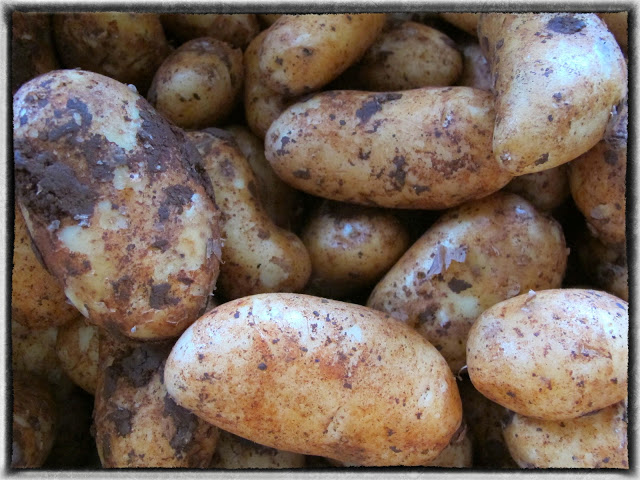 Cypriot red potatoes, pic: Kerstin Rodgers/msmarmitelover