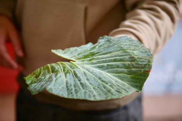 Portuguese kale for caldo verde, Funchal, Madeira,  pic: Kerstin Rodgers/msmarmitelover