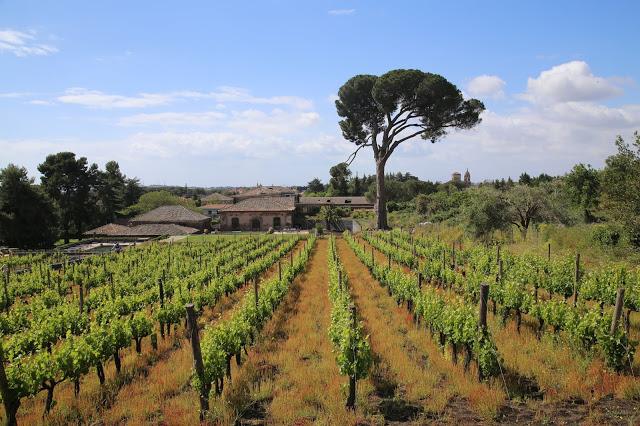 Etna wines, Benante winery, Sicily,