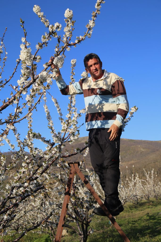 picota cherry blossom Jerte Valley, Spain pic: Kerstin Rodgers/msmarmitelover.com
