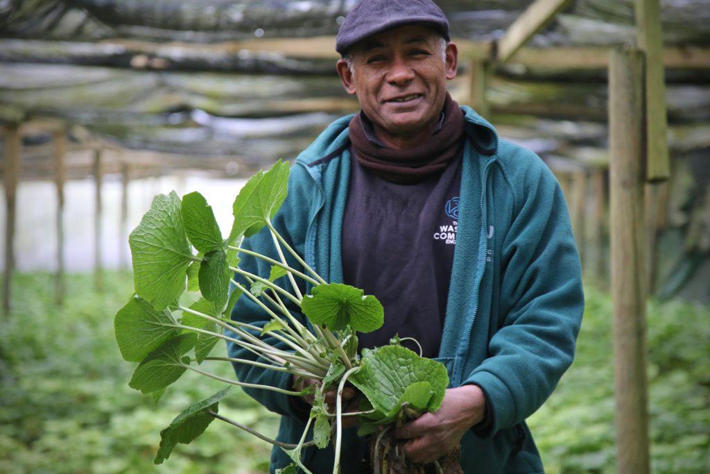 David Turton, wasabi farmer, winchester Pic:Kerstin Rodgers/msmarmitelover.com