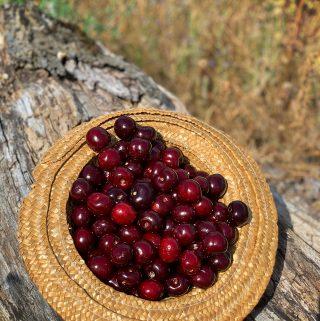hatful of Picota cherries pix: Kerstin Rodgers/msmarmitelover.com