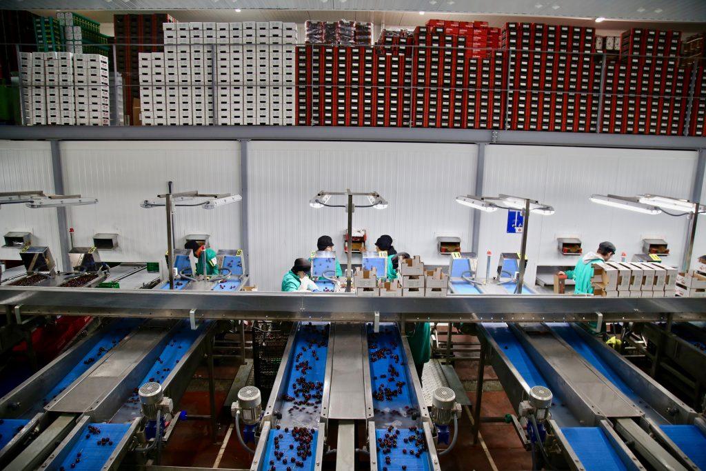 Jerte cherry factory pix: Kerstin Rodgers/msmarmitelover.com