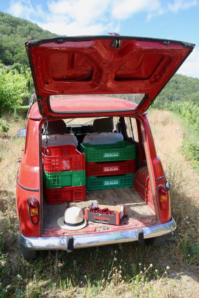 picota cheries Jerte valley  pix: Kerstin Rodgers/msmarmitelover.com