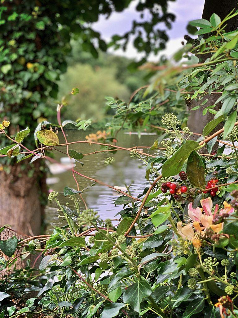 Hampstead Ladies Pond, London, pix: Kerstin Rodgers/msmarmitelover.com