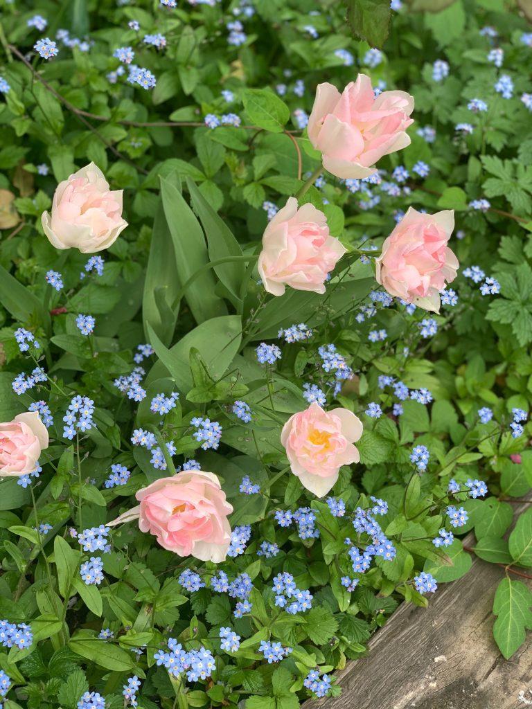 In my garden pic: Kerstin rodgers/msmarmitelover.com